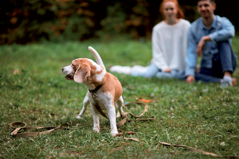 Understanding Pet Activity During Different Environmental Conditions