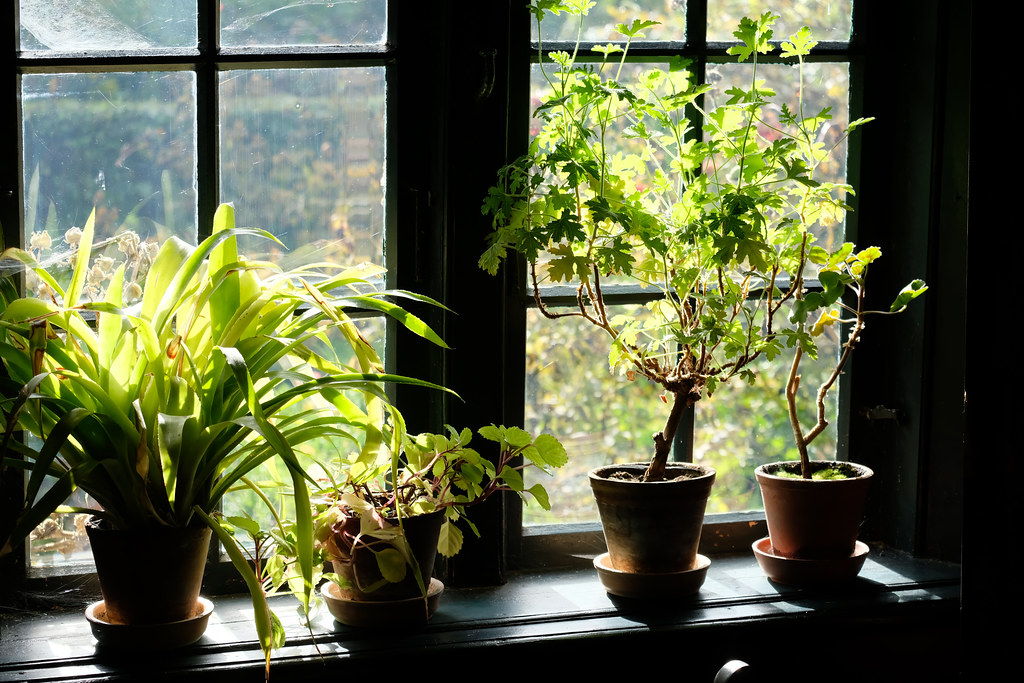ALL YOU NEED TO KNOW ABOUT INDOOR PLANTS