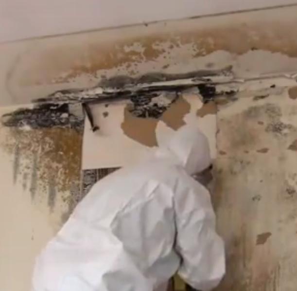 Richmond Mold Removal Pros